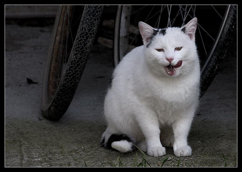 gatto1.jpg