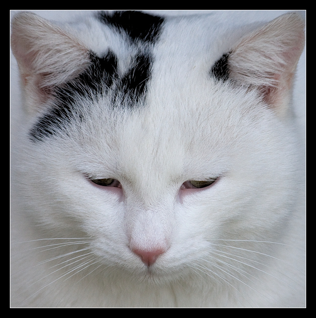 gatto3.jpg